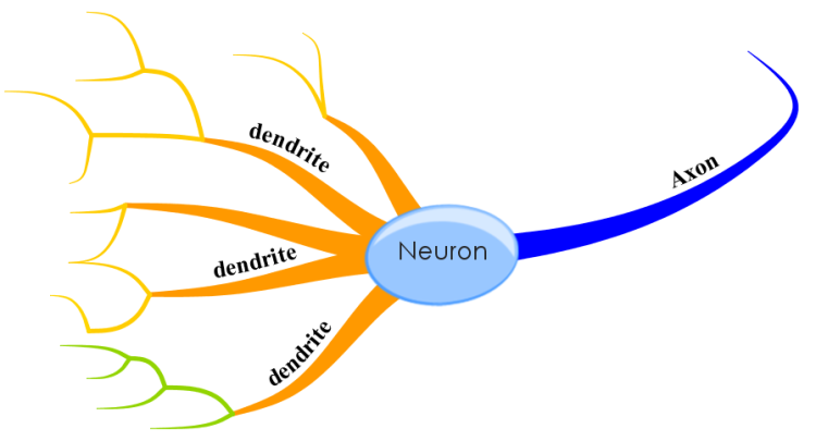 neuron image template mind map
