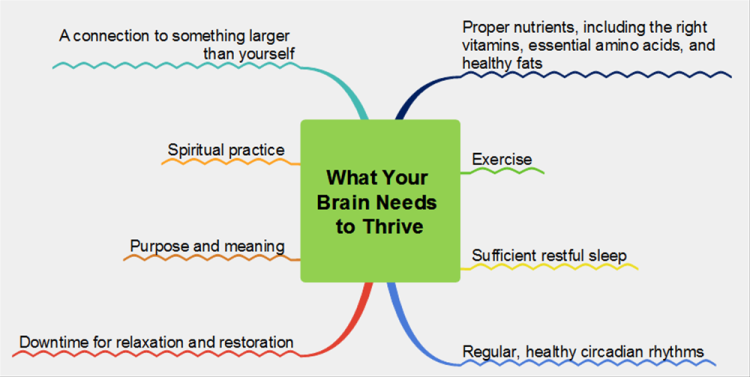 What Your Brain Needs to Thrive