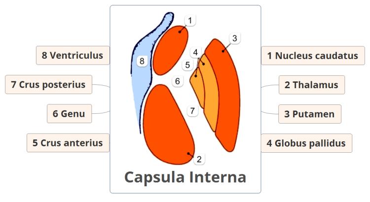 Xmind Capsula Interna Mind Map Biggerplate