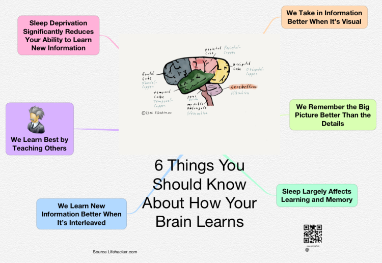 iThoughts: 6 Things You Should Know About How Your Brain ...