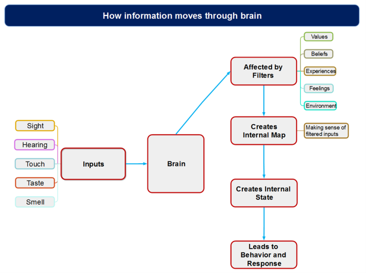 How information moves through brain