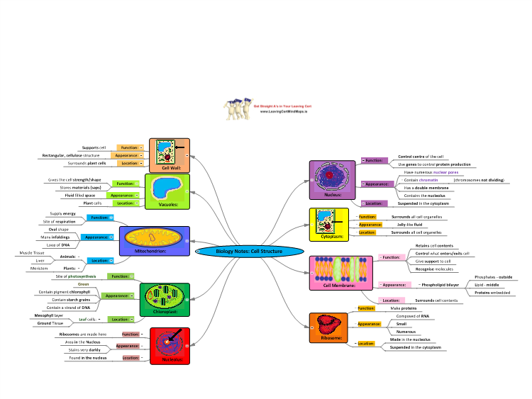 biology cell notes The modern cell theory, one of the fundamental generalizations of biology, holds  that: all organisms are composed of one or more cells new cells c.