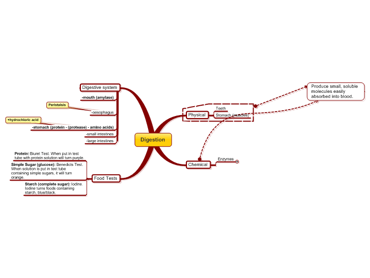 Mindmanager digestion gcse mind map biggerplate digestion gcse ccuart Images