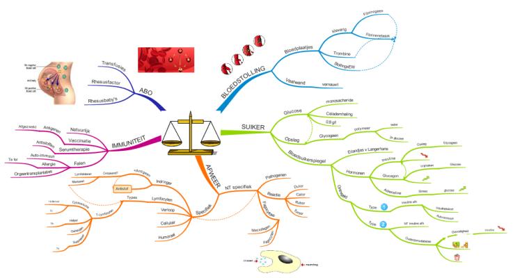 homeostase afweer  imindmap mind map template
