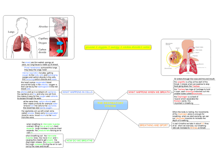 mind map dating