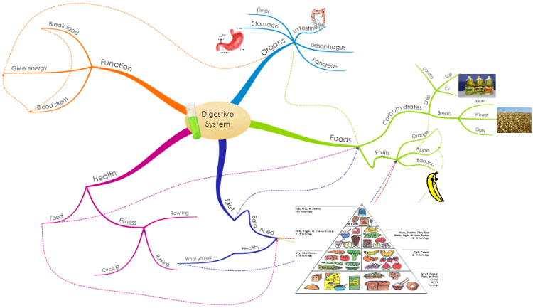 Rtj Re Digestive System By Rory Mind Map