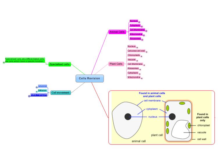 Photosynthesis vs. Cellular respiration
