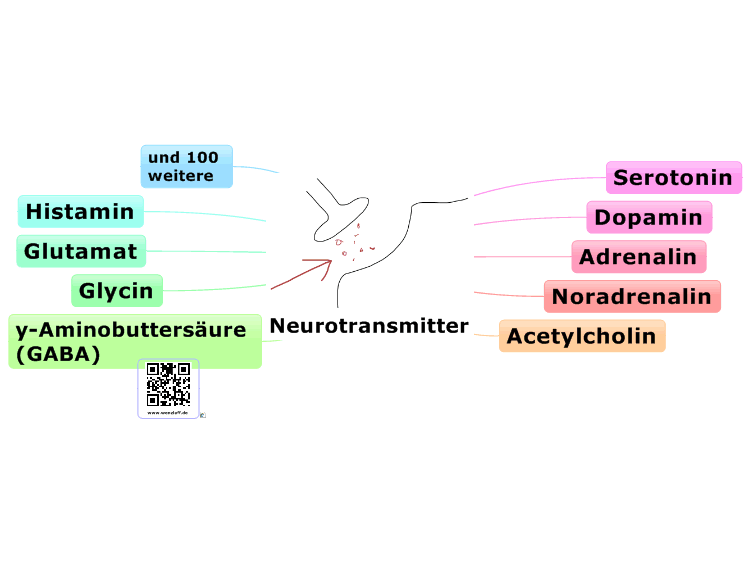 Neurotransmitter mind map | Biggerplate