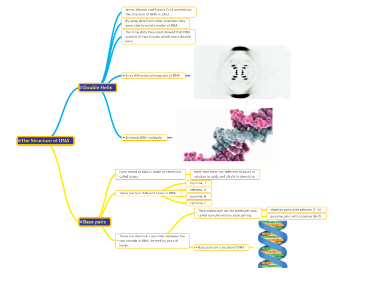 the structure of dna mindgenius mind map template