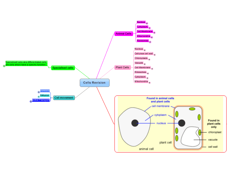 Animal cell diagram gcse smartdraw diagrams animal cell labelled clip art at clker com vector ccuart Gallery